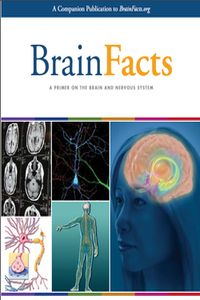 BrainFacts.org BrainFacts